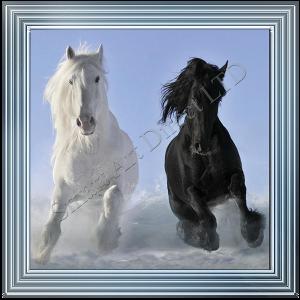 Black & White Horses in the Snow