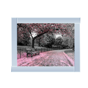 Bench with Pink Blossom