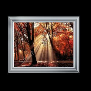 Autumn Sun Shining through the Trees