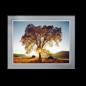 Autumn Sunset Tree