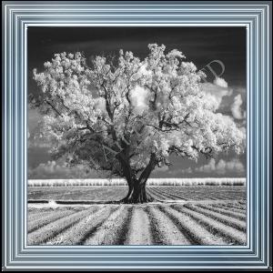 Black & White Tree in Plough Field